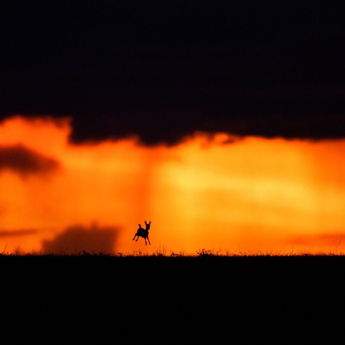 Sunset Frolic