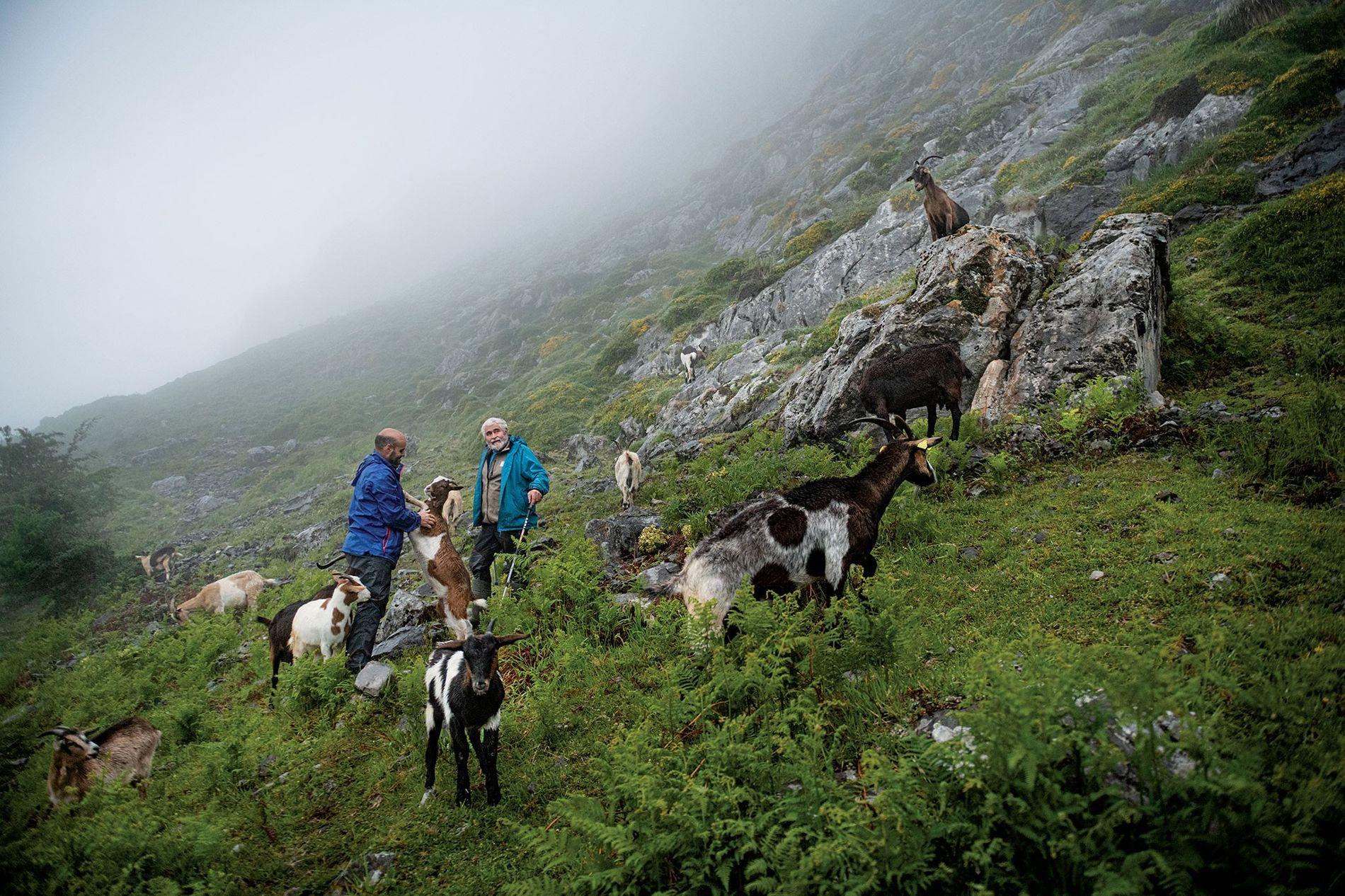 Spanish Flock