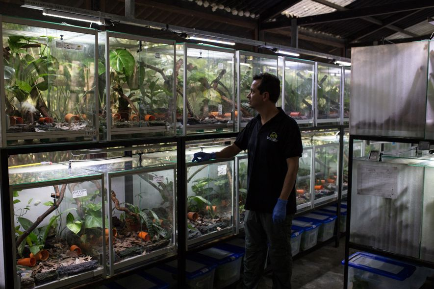 Ivan Lozano started Tesoros de Colombia as a conservation programme aimed at protecting critically endangered frog ...