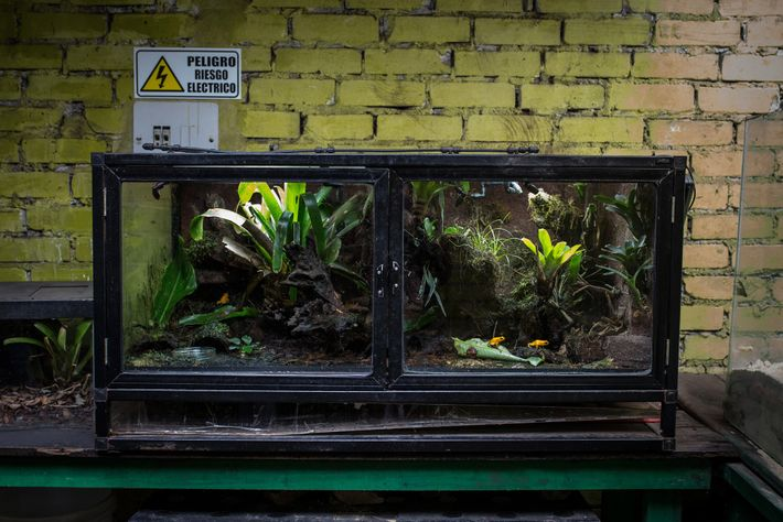 Keeping poison dart frogs is a hobby that's grown exponentially in recent years. But trafficking for ...