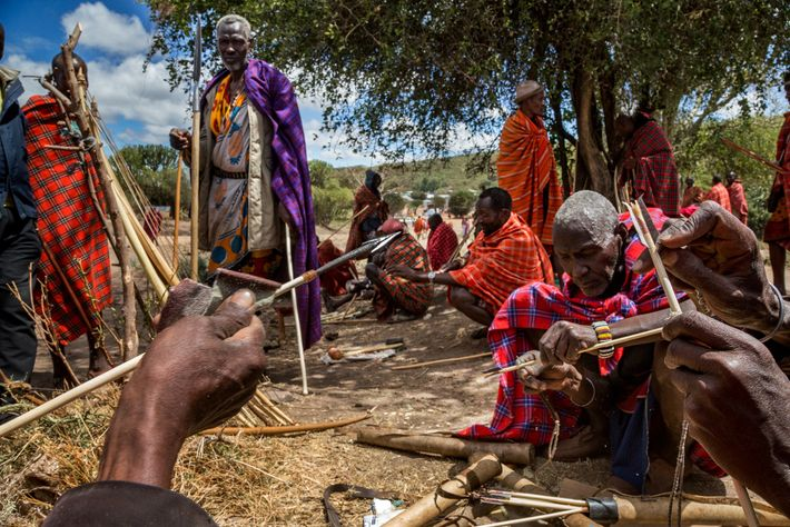 A traditional way to kill animals with poison is to tip arrows—like these made by Maasai ...