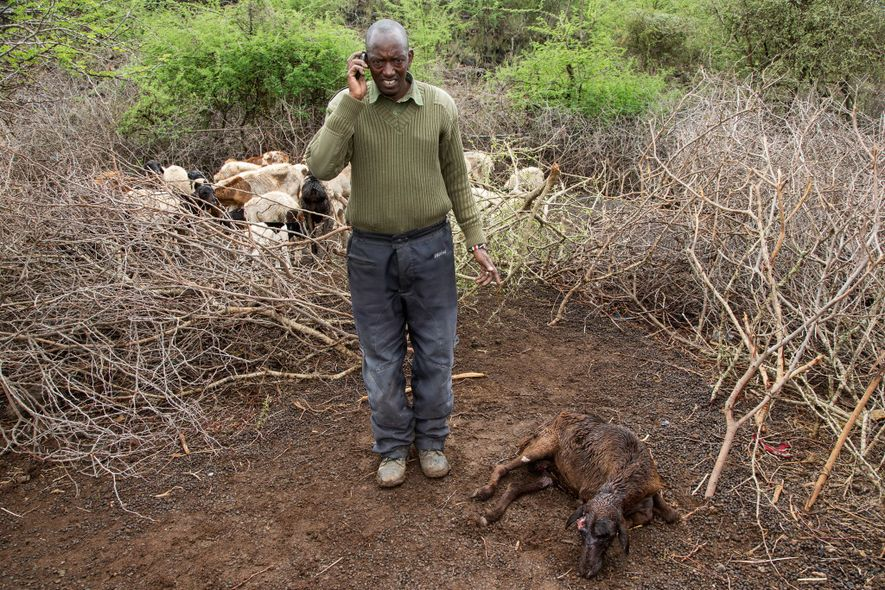 A Big Life officer reports to headquarters after a hyena killed sheep on collectively owned tracts ...