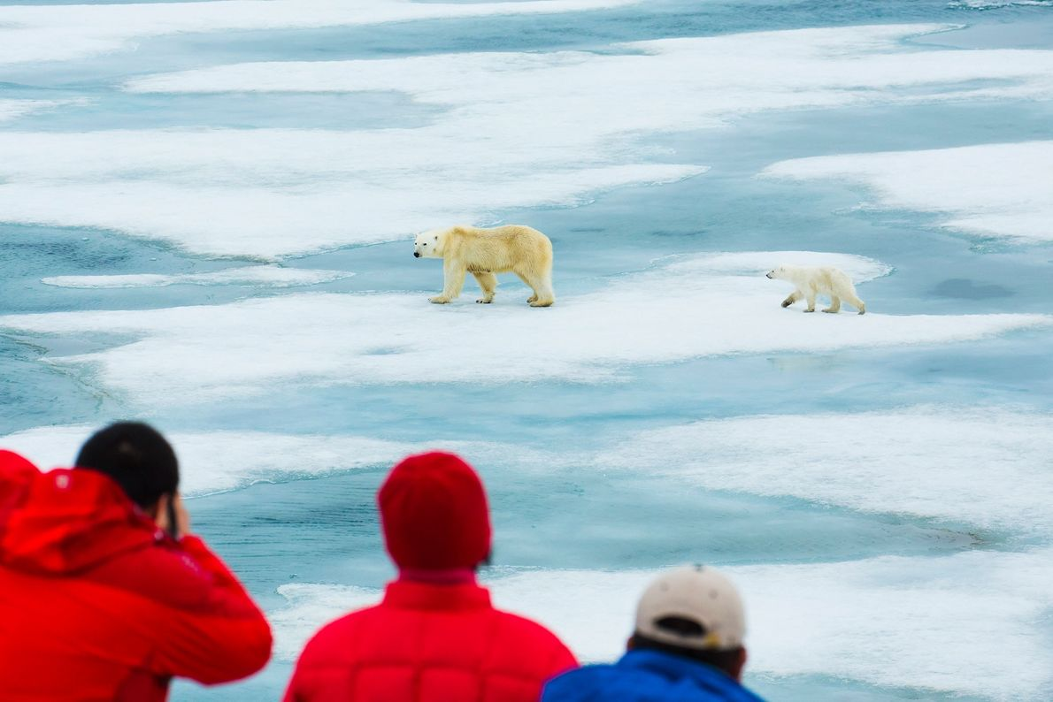 Visitors watch two polar bears walk across the ice in Svalbard, Norway. To ensure an animal-friendly ...