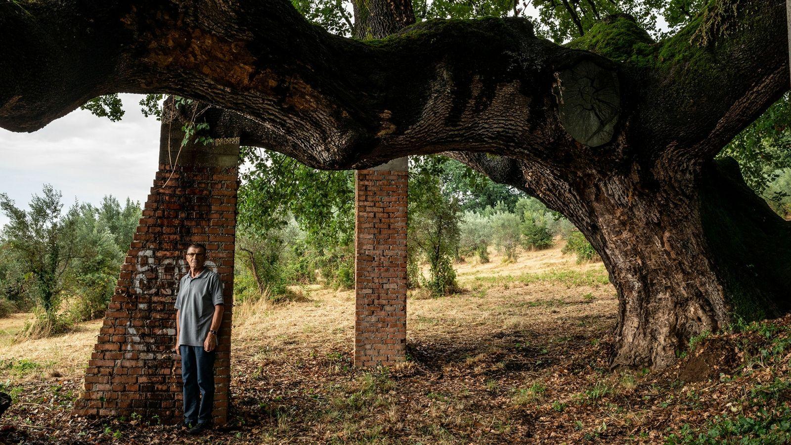 monumental-oak-person