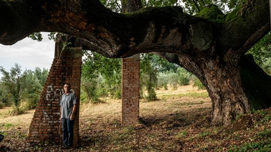 See the beautiful, ecologically priceless trees Italy is protecting forever