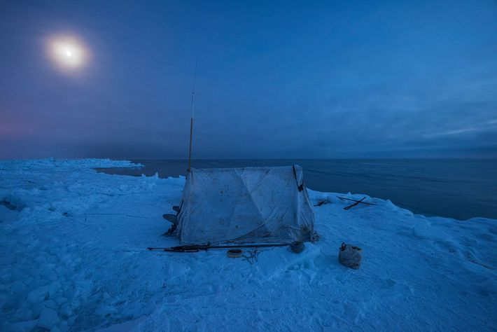 High above the Arctic Circle on sea ice a mile from shore, a blind shelters members ...
