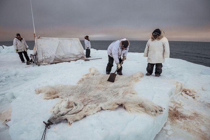 Members of the Yugu crew clean the hide of a 'nanuq', or polar bear, that had ...