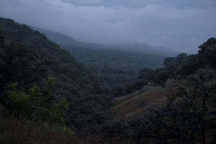 Tarantulas have been found in Primavera Forest National Park, near Rodrigo Orozco's breeding facility. Habitat destruction ...