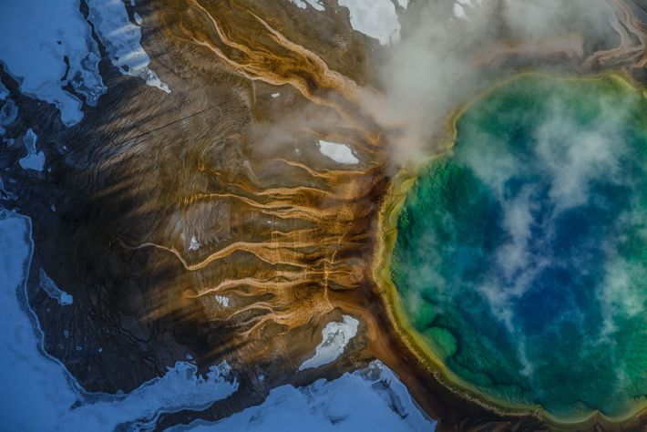 The colours of Grand Prismatic Spring in Yellowstone come from thermophiles: microbes that thrive in scalding ...