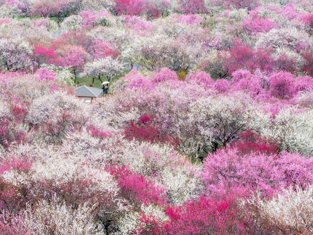 Inabe, Japan