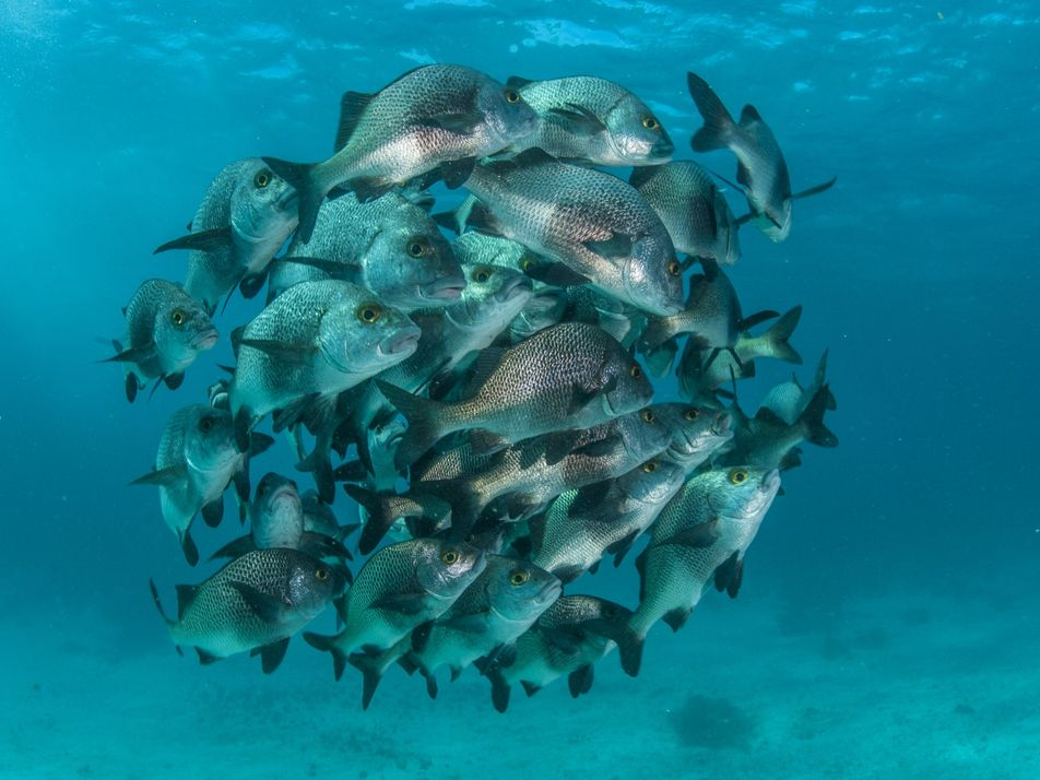 Glorious pictures of pristine marine protected areas around the world