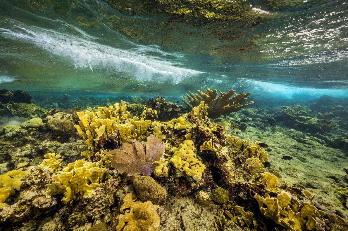 Protected elkhorn corals, brain corals and purple sea fans at Buck Island Reef National Monument, in ...