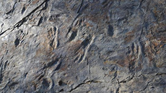 Trackways at the Sacheon Jahye-ri site in South Korea appear to have been made by a ...