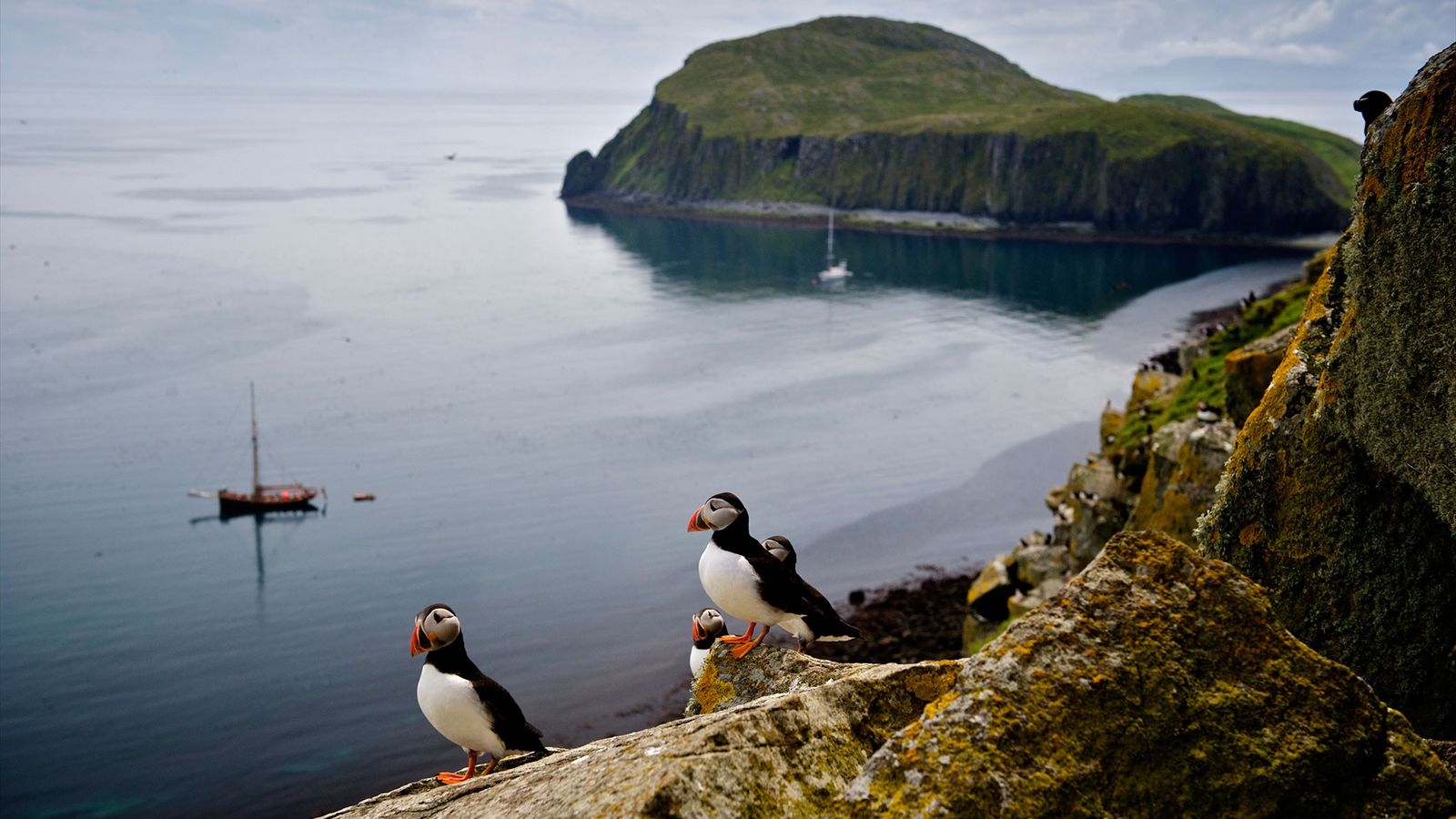 Atlantic puffins on the slopes of Garbh Eilean in the Shiant Isles.