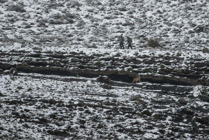 Wildlife photographer Ingo Arndt and a professional puma tracker shadow a puma across a steep cliff ...