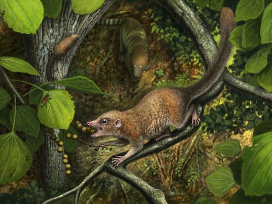 Did ancient primates walk alongside T. rex? New evidence backs up theory.