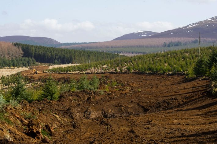 Forestry and Land Scotland activities at Clashindarroch, in Aberdeenshire. Felling on the site has attracted controversy due to the ...