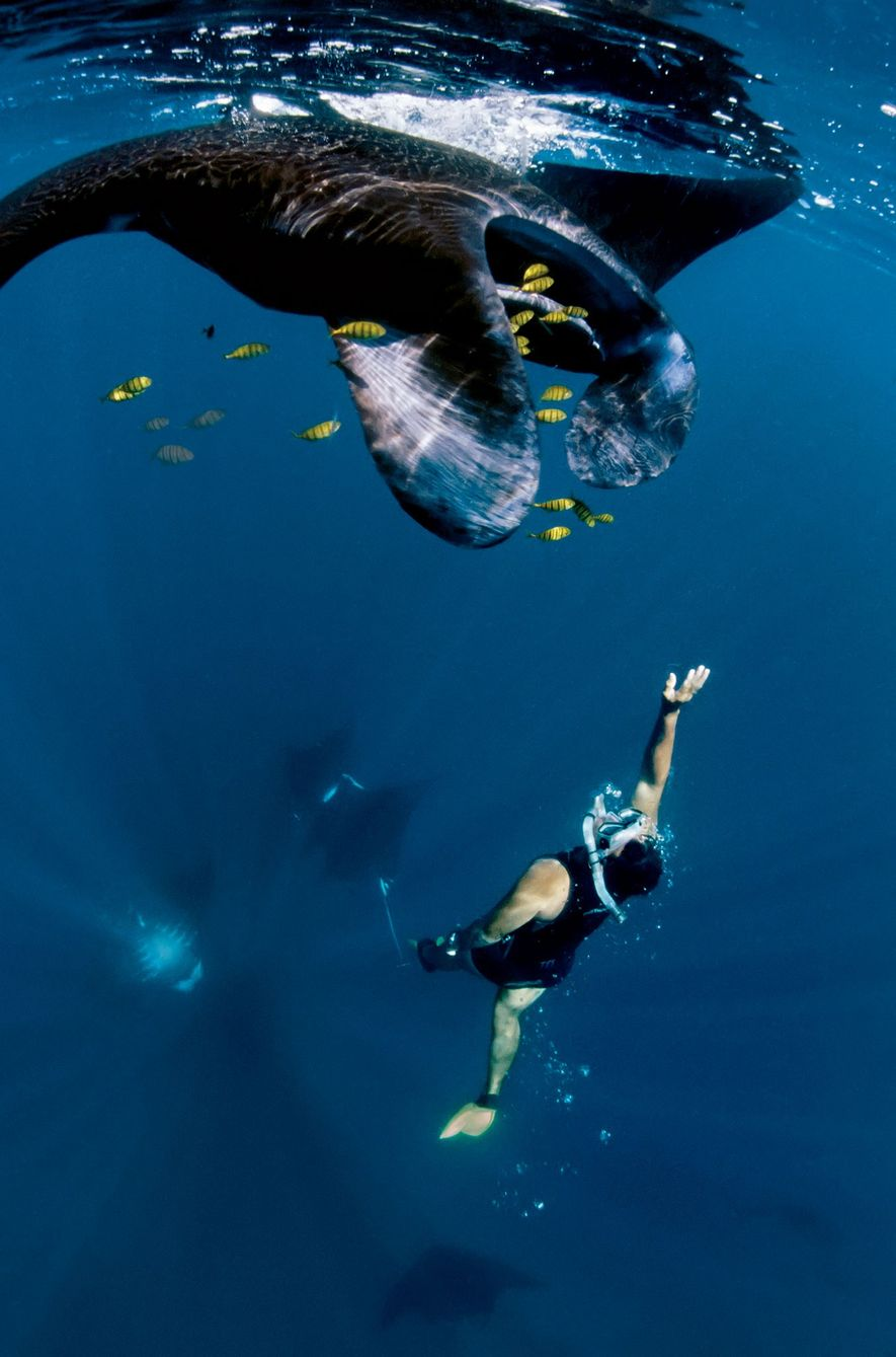 Discover the Best Places to Watch Manta Rays