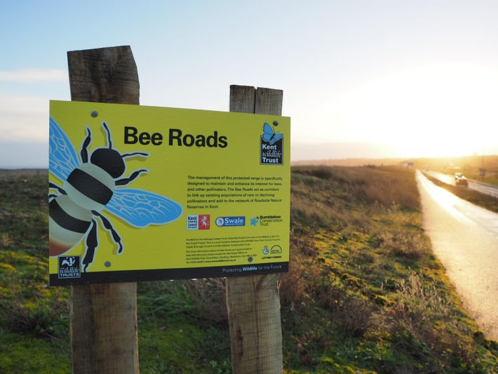 'Bee Roads,' a conservation scheme by the Wildlife Trusts, aimed to create roadside nature reserves to assist ...
