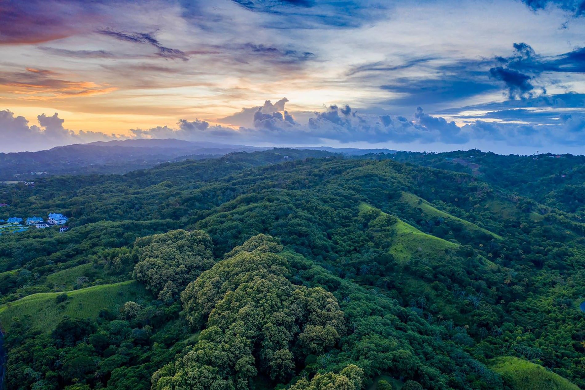 The Main Ridge Forest Reserve, one of the most biodiverse areas in the Caribbean and the ...