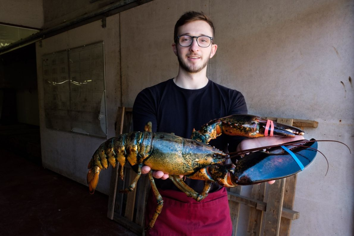 Reid Camero, who works at Halls Harbour Lobster Pound, holds a large five-pound lobster.
