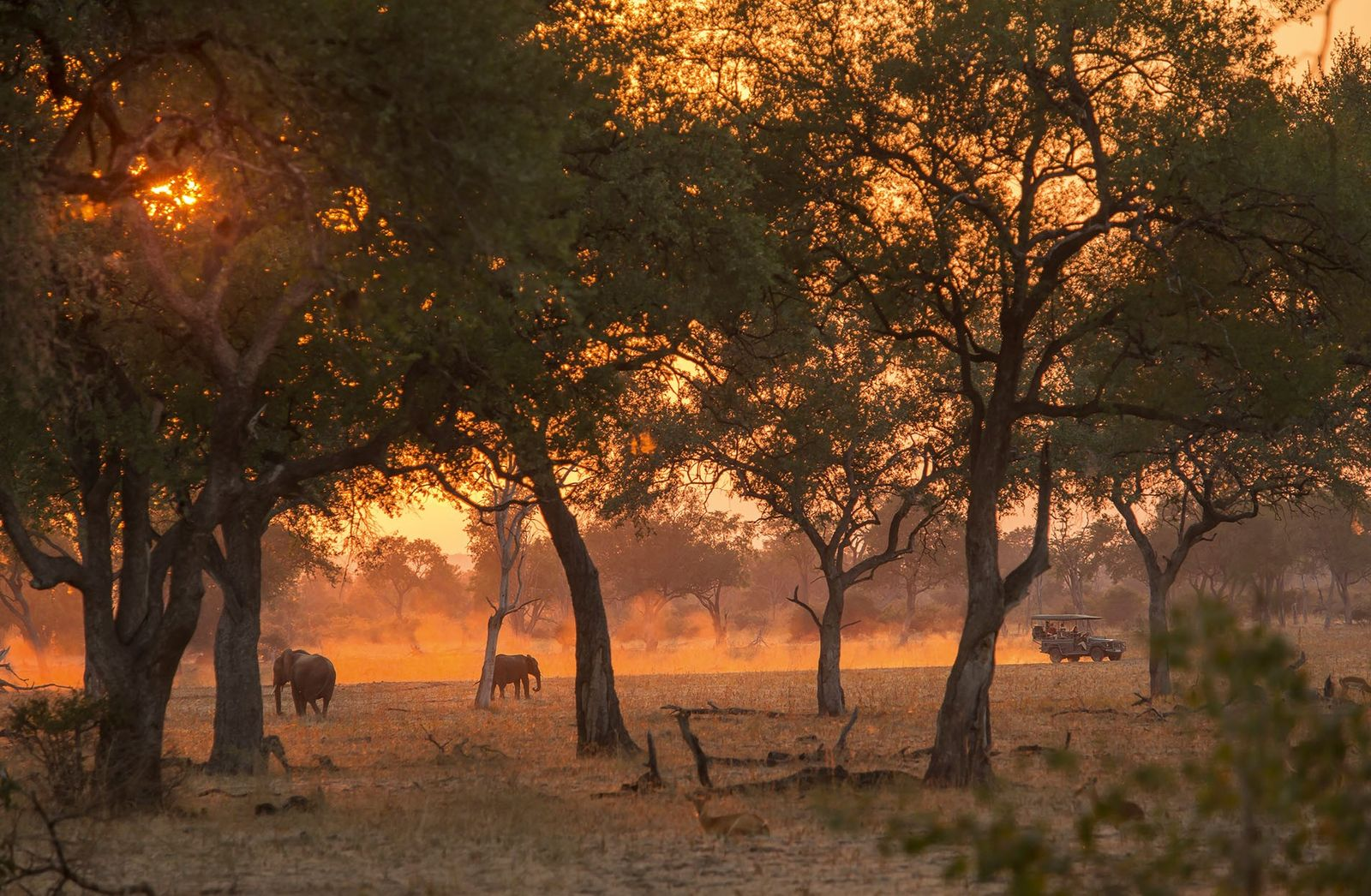 A safari vehicle passes a pair of elephants at sunset in South Luangwa National Park, Zambia.