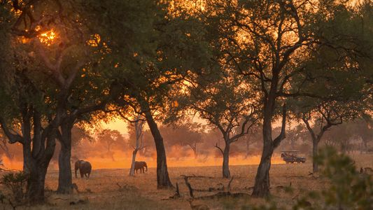 Can tourism reverse the impact of poaching in Zambia and Zimbabwe?