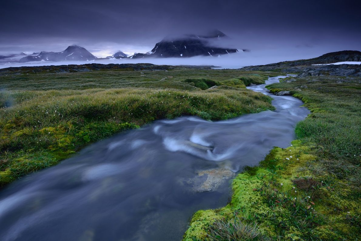 Green flora sprouts up along the river banks on a small island in southeastern Greenland.