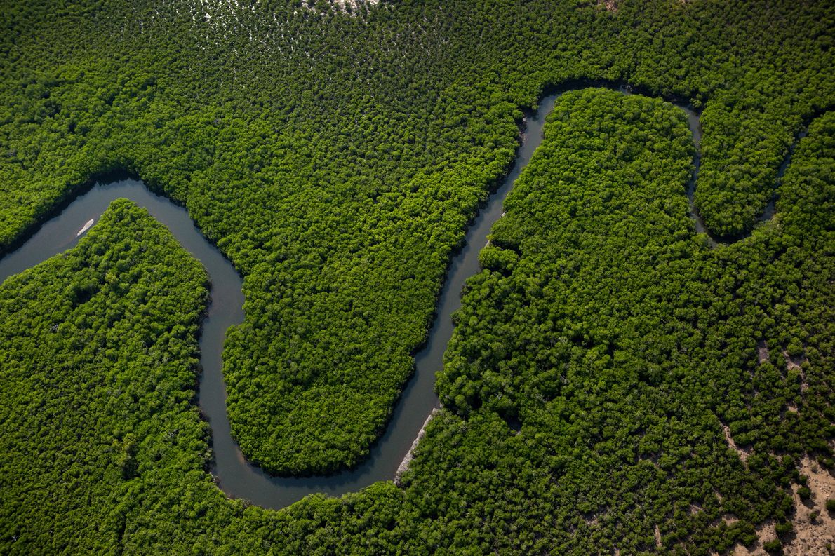 A river snakes through the verdant Tiwi Islands, as seen from a helicopter.