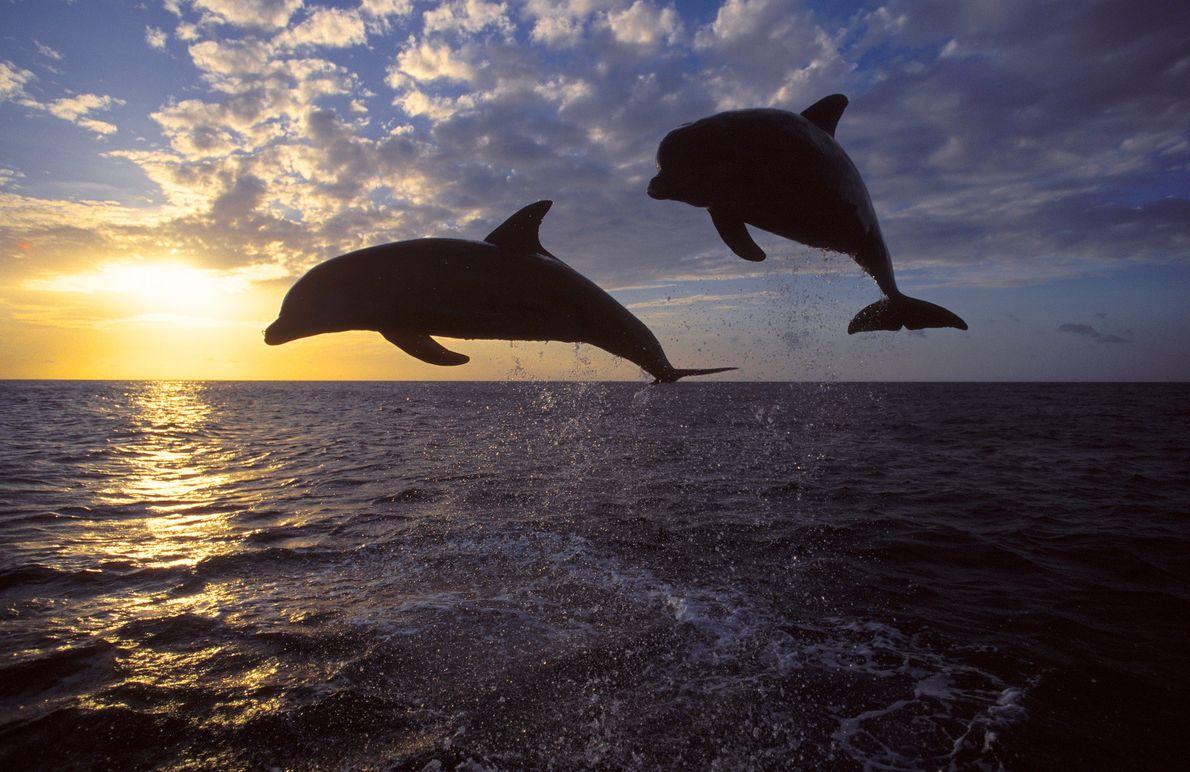 Dolphin's Den