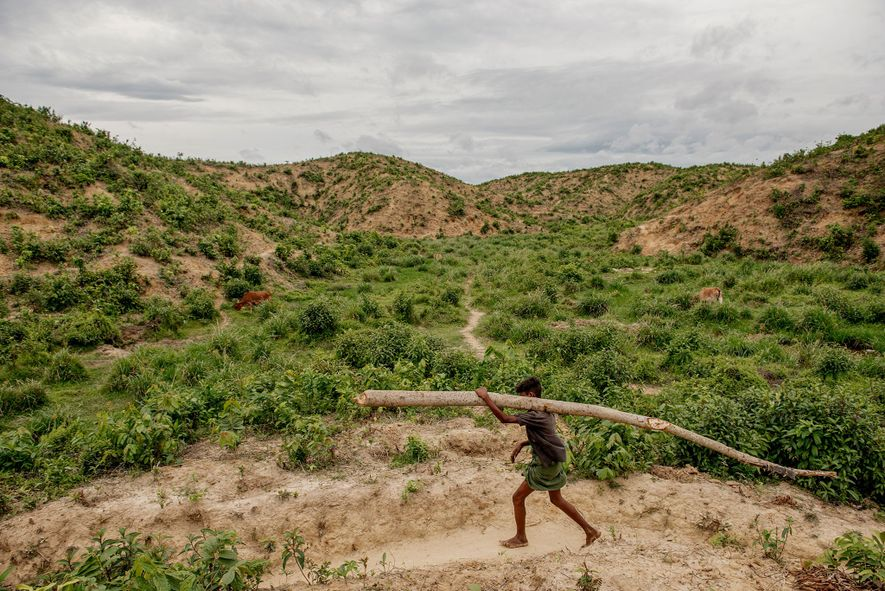A Rohingya boy hauls a log from the forest back to camp. Cutting down trees in ...