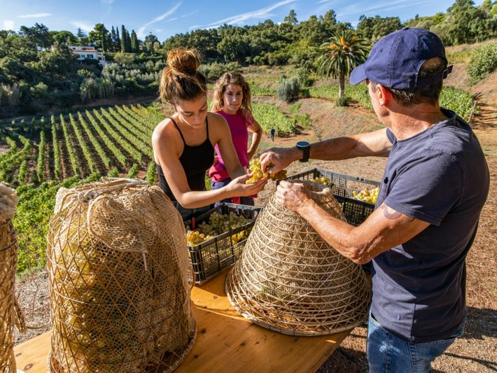 Roman Wine Arrighi foto nassa