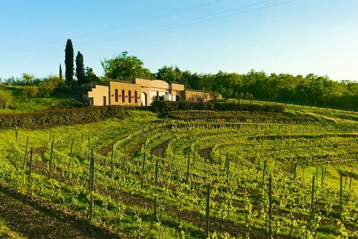 Roman Wine Fattoria Fibbiano IMG_6129