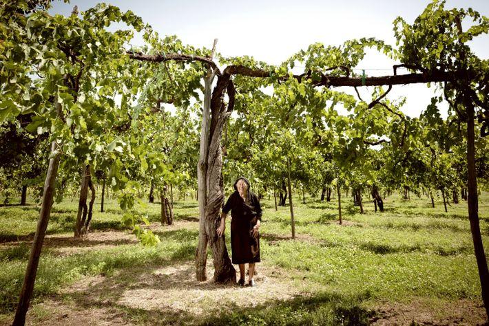 Roman Wine Feudi image00626