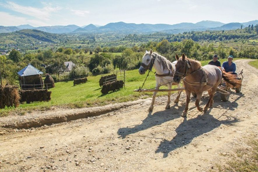 A pair of farmers on the road between the villages of Botiza and Slatioara, in the ...