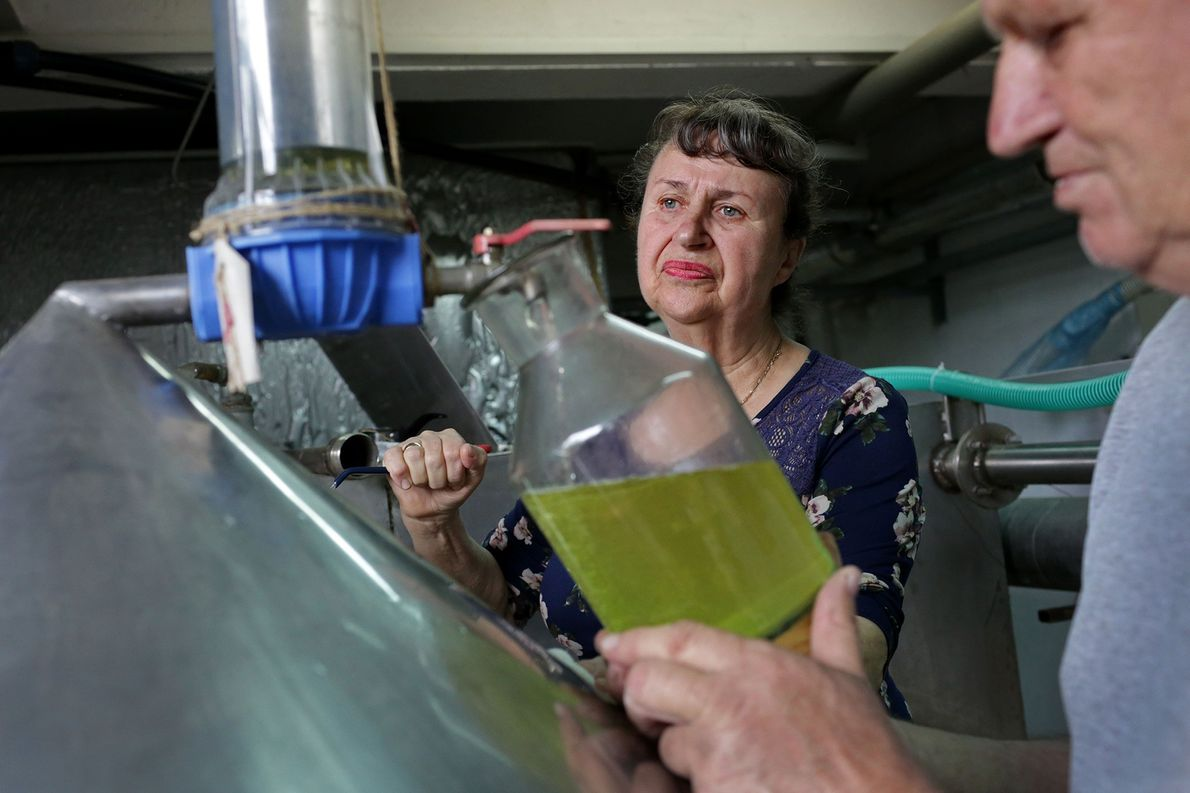 Elena Todorova and her husband Marin, CEO of Lema Distillery, gather rose oil from the caldrons ...