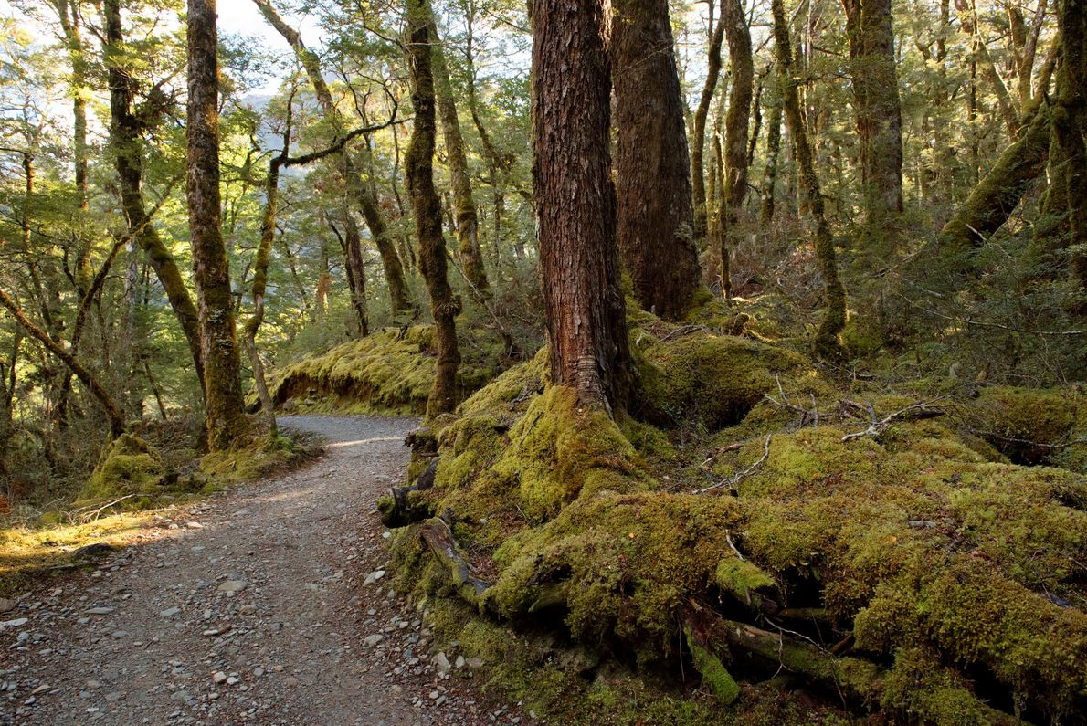The Routeburn Track is 20 miles one way.