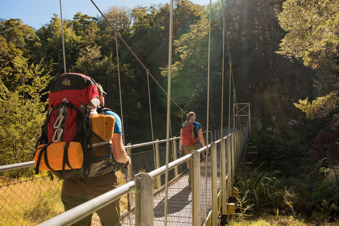 Through the beech forest you can find the Routeburn Gorge.