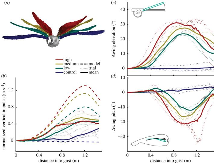 Graphic demonstrating the response of the owl wings to various degrees of gusting. The paper's findings ...