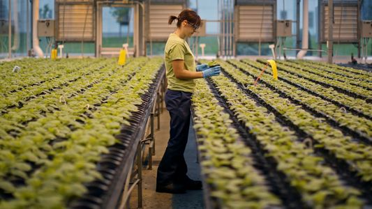 Your next vaccine could be grown in a tobacco plant