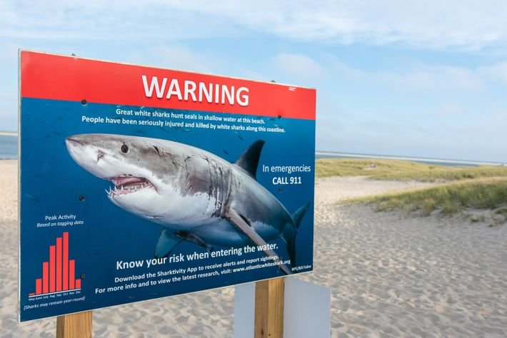 A sign warning bathers of the presence of great white sharks off Lighthouse Beach, Cape Cod, Massachusetts. ...