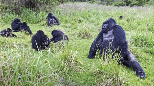 Rwanda: searching for gorillas in the mist