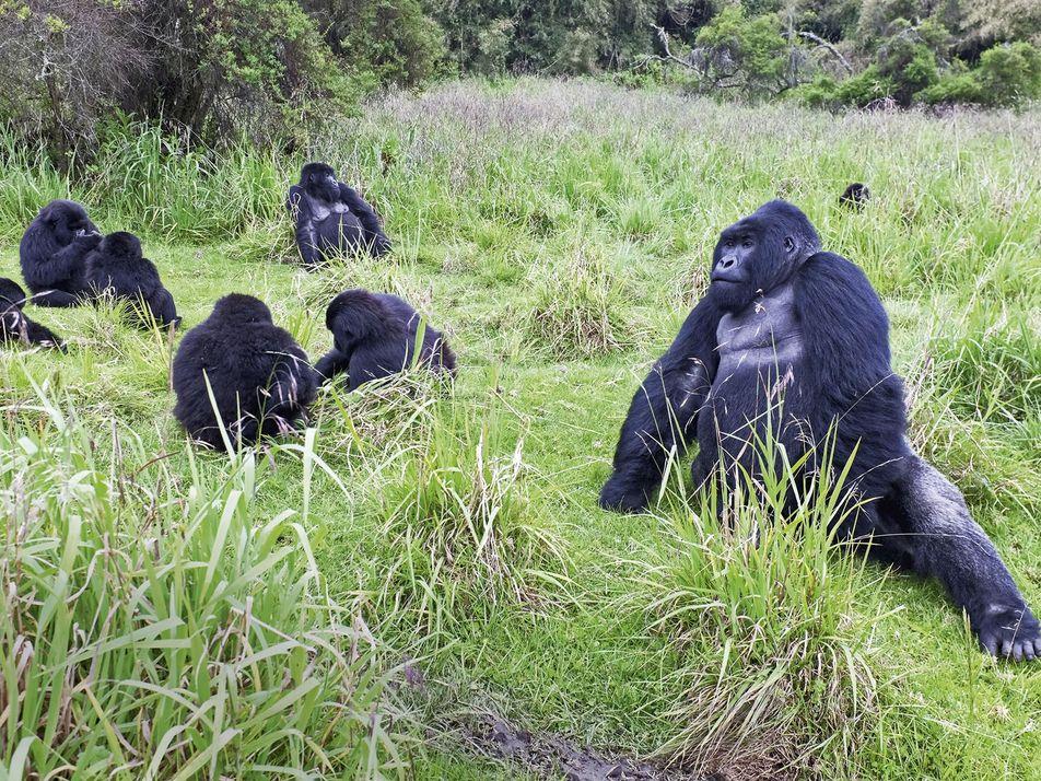 Rwanda: searching for gorillas in the mist