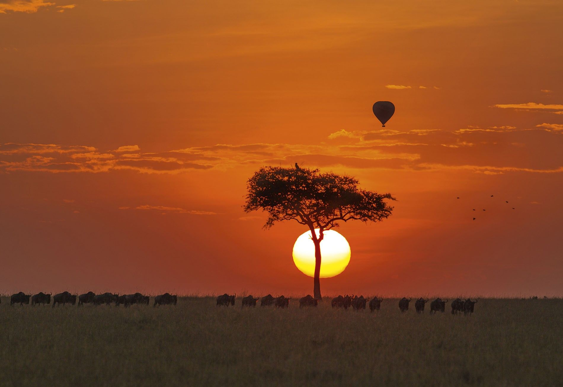 Anyone who'd like to sample the thrill of hot air ballooning over the Maasai Mara has just a sliver of opportunity each day, as balloonists start inflating their colourful craft long before sunrise.