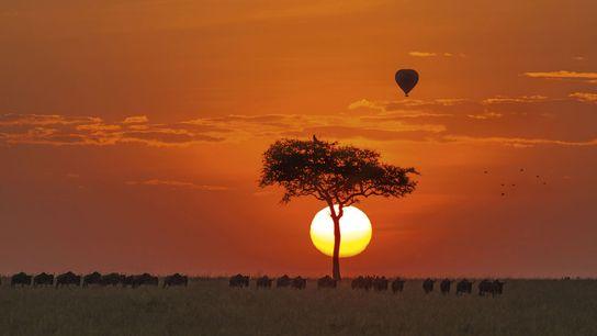 Dawn on the Maasai Mara, Kenya.