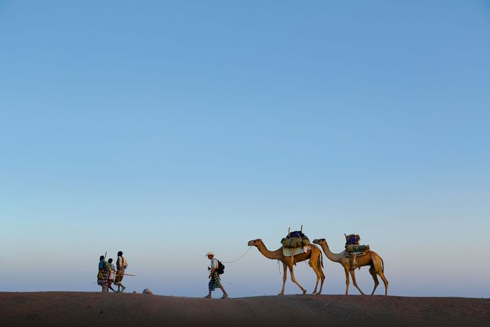 Salopek, with guides, leads a pair of cargo camels, Fares and Seema, across Ethiopia's Afar desert.