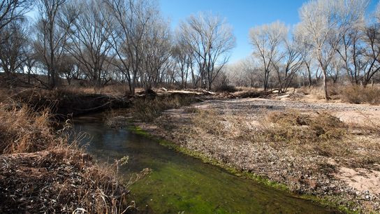 The San Pedro River in Arizona has seen its flows decrease over the past few decades ...