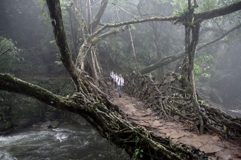 Surreal Photos of India's Living Root Bridges