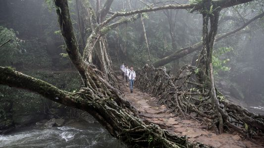 Surreal Photos of India's Living Root Bridges