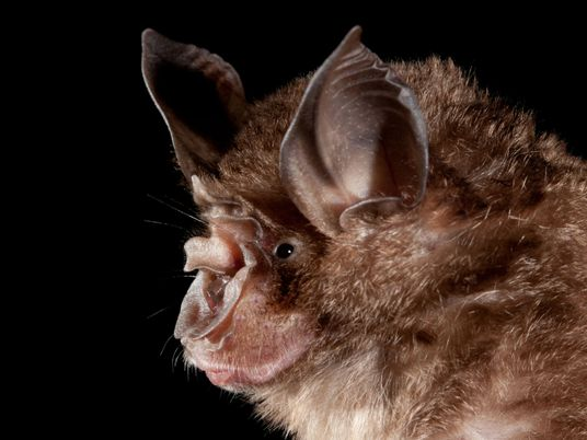 Humans are creating hot spots where bats could transmit zoonotic diseases